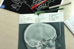 2-цикл-учебный-центр-для-ортодонтов_020